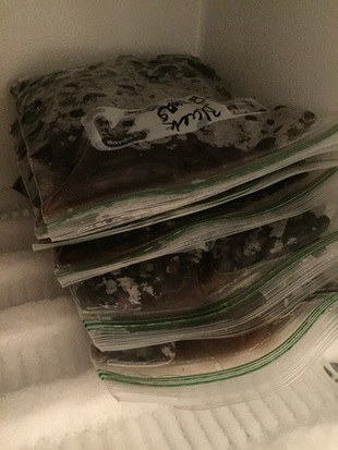 Freeze cooked dry beans to save $ and control quality
